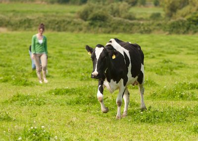 Beal Cheese_005_Cows