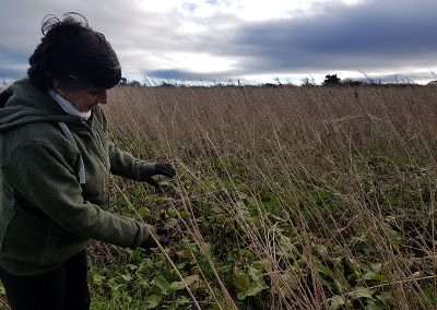 Beal-Farm-Hemp-Kate-picking-hemp